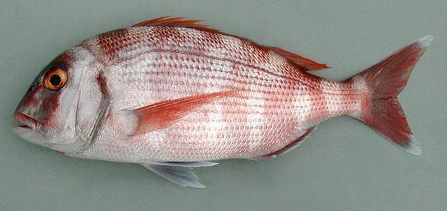Türkiye'de denemesi gereken en lezzetli 10 balık 1