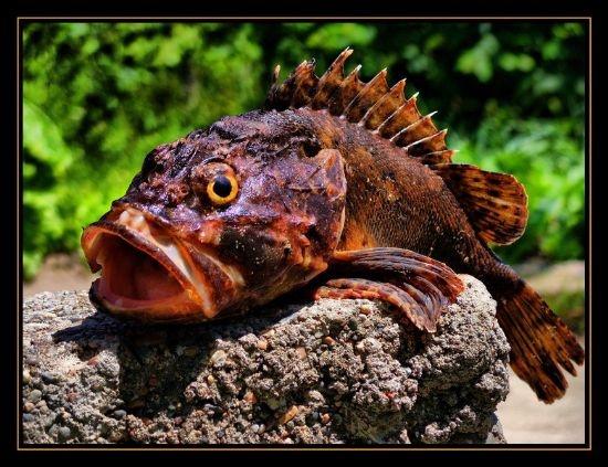 Türkiye'de denemesi gereken en lezzetli 10 balık 7