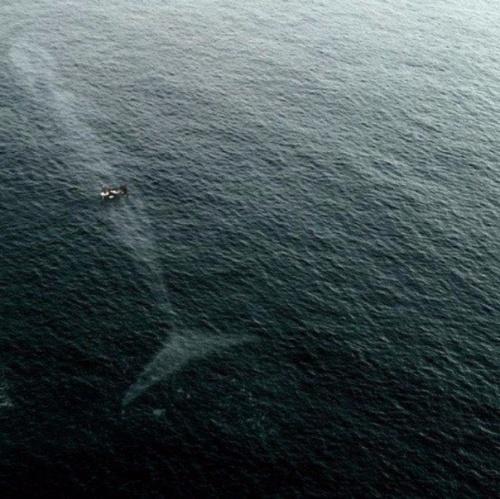 Denize girmeden önce iki kere düşünün 13