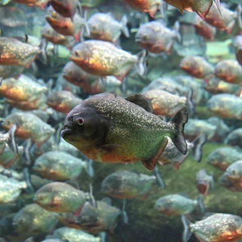 Okyanusların en zehirli balıkları 10