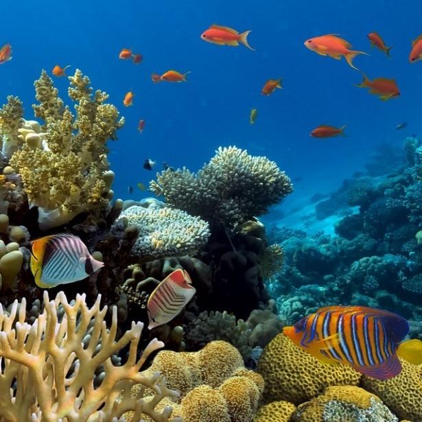 Okyanusların en zehirli balıkları 12