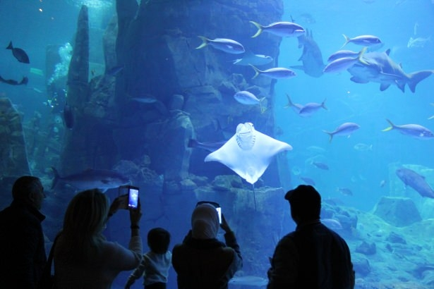 Okyanusların en zehirli balıkları 13