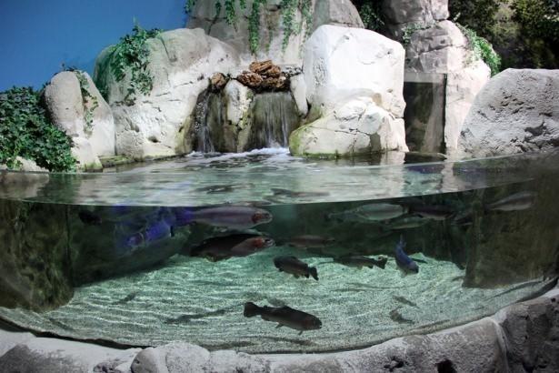 Okyanusların en zehirli balıkları 14