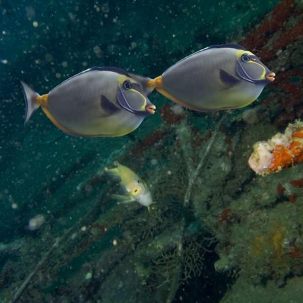 Okyanusların en zehirli balıkları 23