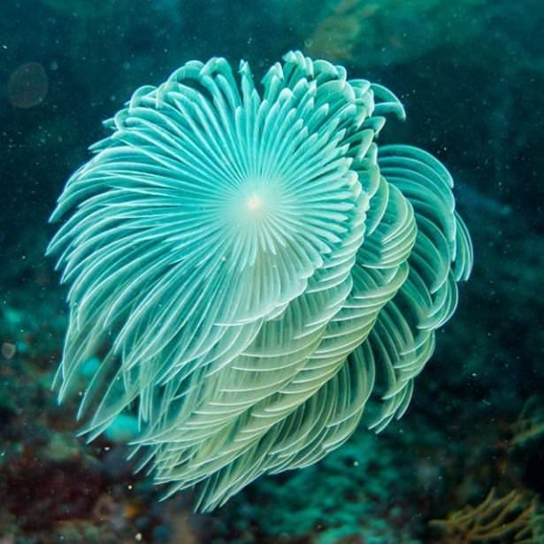 Okyanusların en zehirli balıkları 24