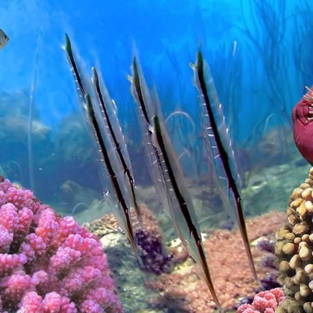 Okyanusların en zehirli balıkları 26