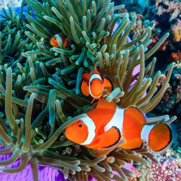 Okyanusların en zehirli balıkları 29