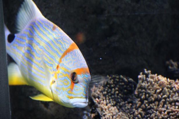 Okyanusların en zehirli balıkları 32