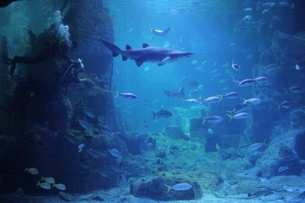 Okyanusların en zehirli balıkları 37