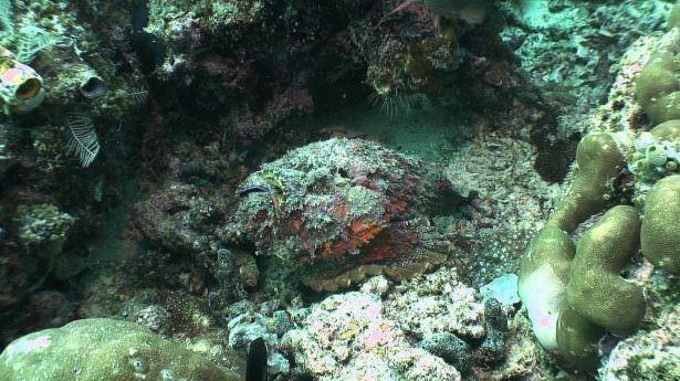 Okyanusların en zehirli balıkları 4