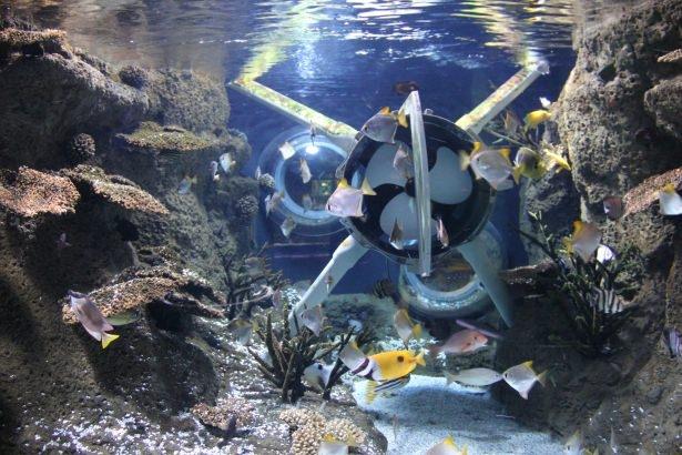 Okyanusların en zehirli balıkları 44