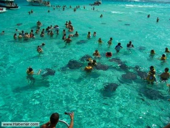 Her şey vatozlarla yüzmek için 7
