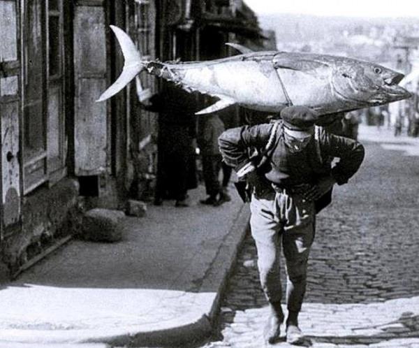 İstanbul bir zamanlar balık cennetiydi! 1