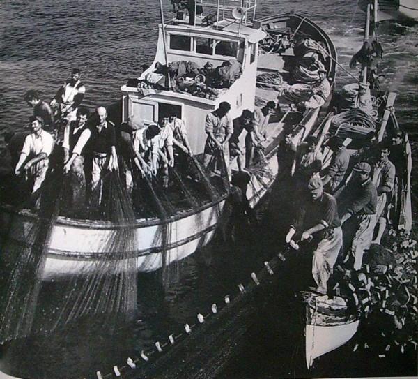 İstanbul bir zamanlar balık cennetiydi! 22