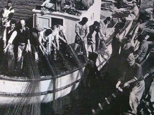 İstanbul bir zamanlar balık cennetiydi!