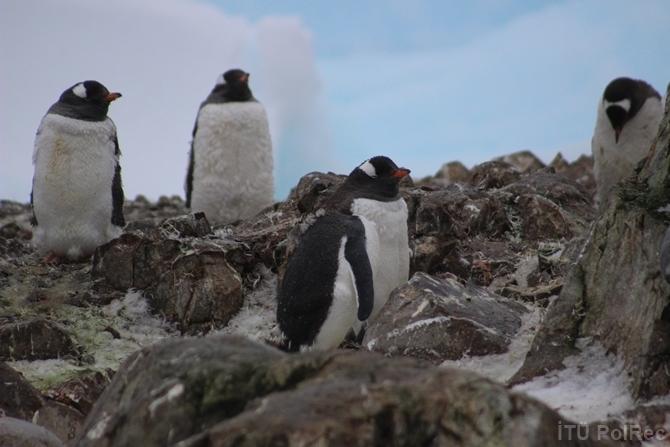 """""""Hepimizin Antarktikası"""" Fotoğraf Sergisi 1"""