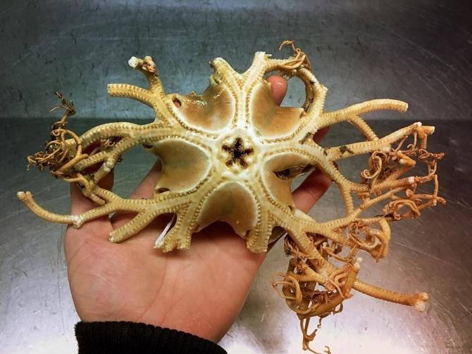 Tuhaf Deniz Canlıları 1