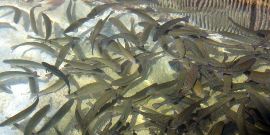 Denizi olmayan Kahramanmaraş, yılda 20 milyon dolarlık balık ihraç ediyo