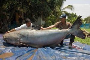 Yakalanan en büyük deniz canlıları 1