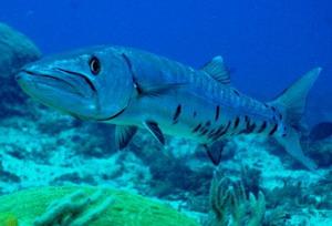 Yakalanan en büyük deniz canlıları 10