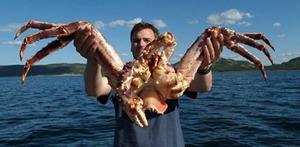 Yakalanan en büyük deniz canlıları 7