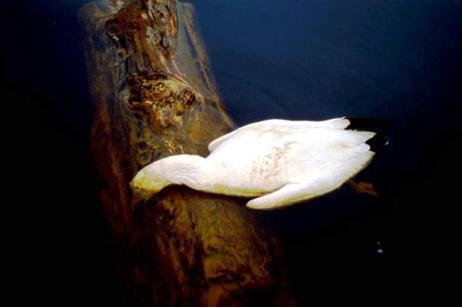 Dünyanın En Zehirli Gölü 1