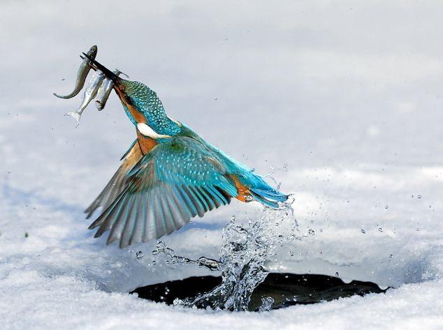 Her şey balık için 4