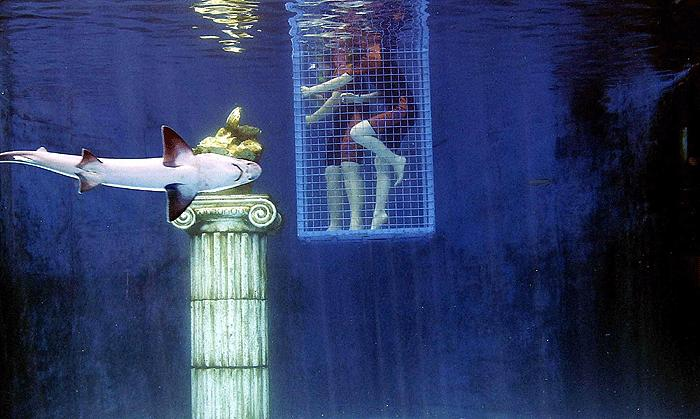 Köpekbalığından istiridye kaçırmaca 10