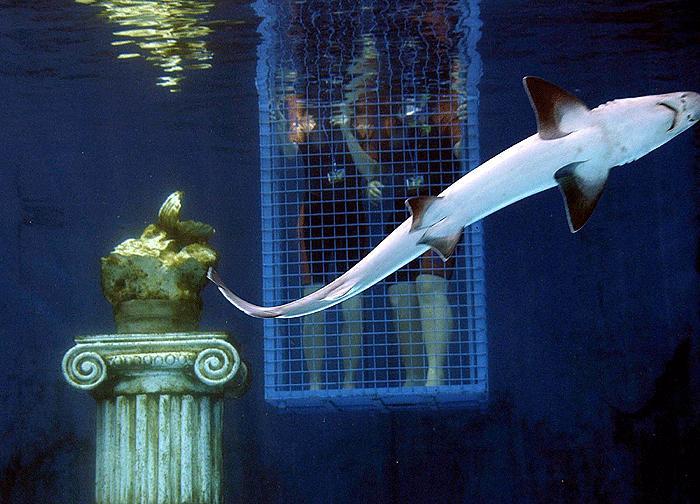 Köpekbalığından istiridye kaçırmaca 6