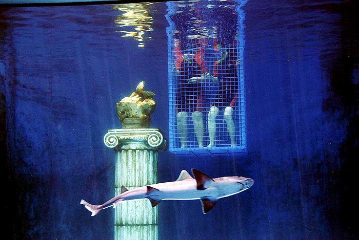 Köpekbalığından istiridye kaçırmaca 8