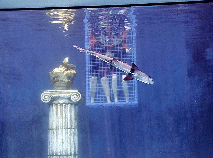 Köpekbalığından istiridye kaçırmaca 9