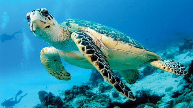 Deniz kaplumbağaları çocuklara anlatıldı