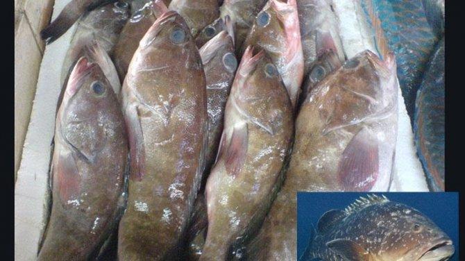 Bu balıklar 4 yıl yasak!
