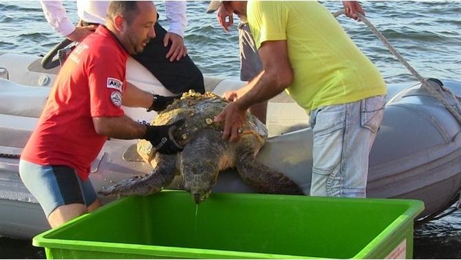 Deniz kaplumbağasının imdadına AKUT ekibi yetişti