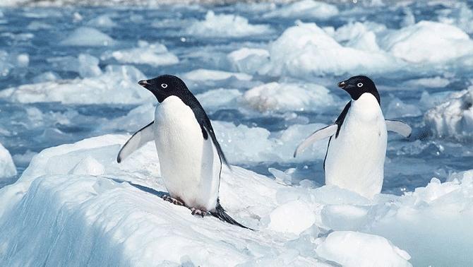 'Buzul Kıta Antarktika' fotoğraf sergisi açılıyor