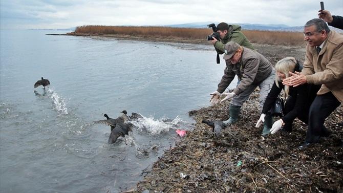 Tedavileri yapılan deniz kuşları doğaya bırakıldı