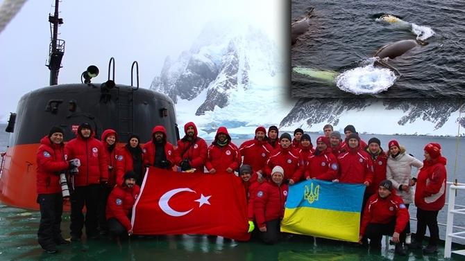 Kambur balinalar için Antarktika'ya gitti
