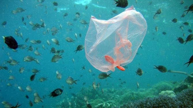 Okyanusların plastik kirliliğine dikkat çektiler