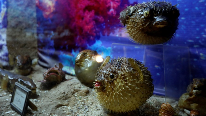 Lübnan'da 35 yıllık emeğin ürünü: Deniz Hayatı Müzesi