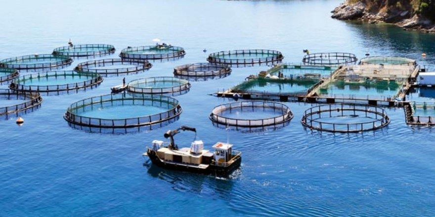 Mersin'de balık çiftlikleri mahkemelik oldu