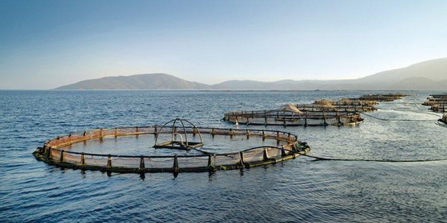 Balık çiftlikleri bin 900 metre açığa taşınacak