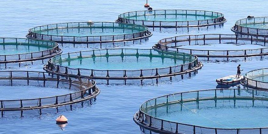 'Balık Çiftlikleri' TBMM'ye taşındı