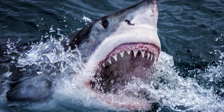 Finans dünyasının ünlü ismi köpekbalığı saldırısında öldü