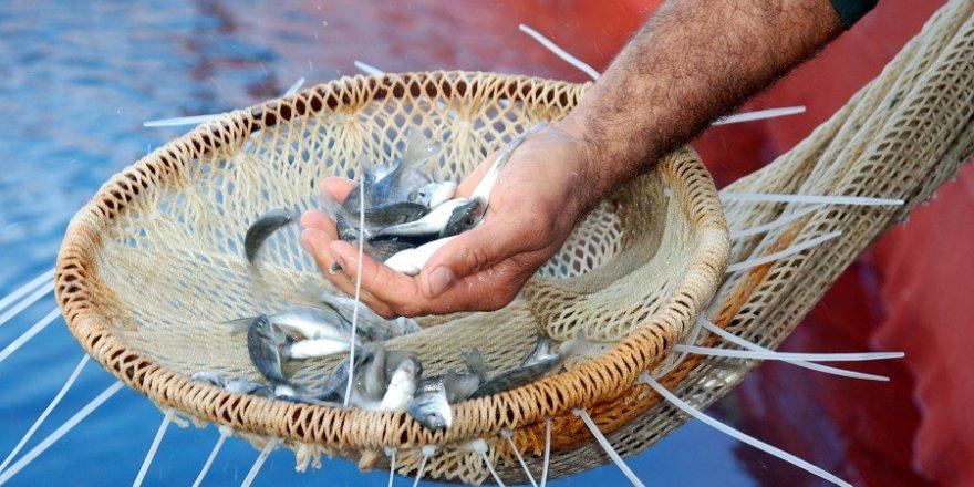 Avrupa Birliği'nde satılan her üç balıktan biri Türk balığı