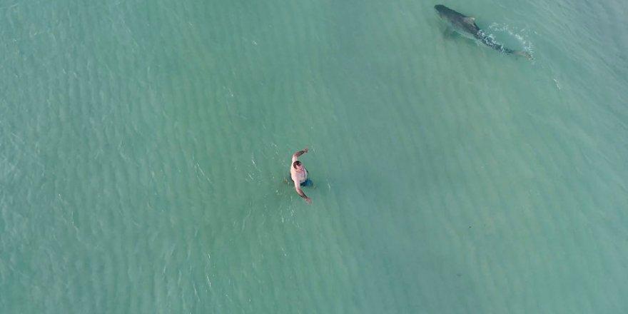 Köpek balıklarına karşı İHA'lar devrede