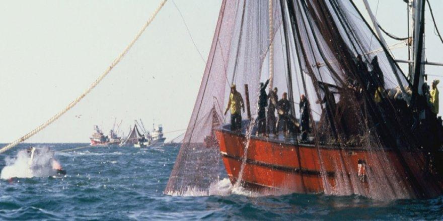 Atlas Okyanusu ve Kuzey Denizi için balık avlama kotası