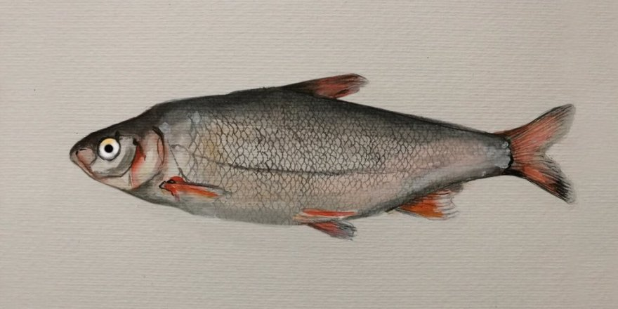 Beyşehir Gölü balık türlerinin nesli tehlikede
