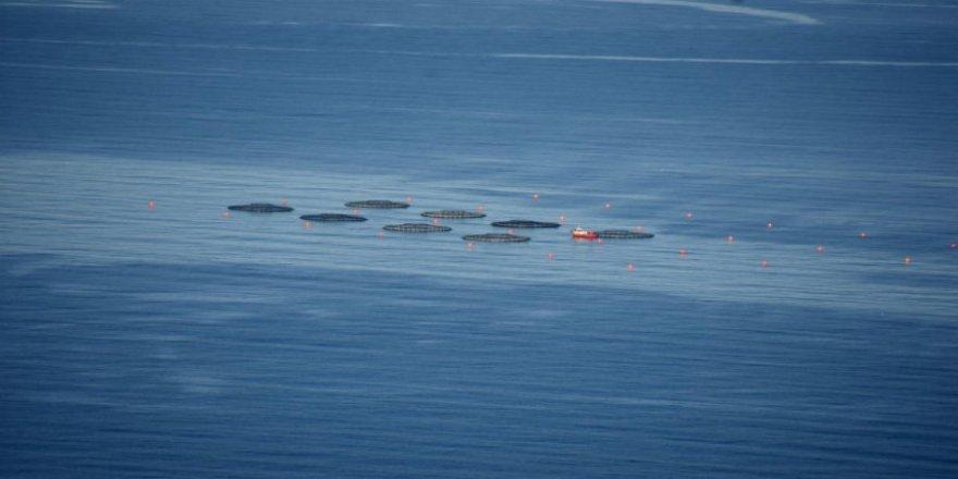 Karadenizli turizmciler balık çiftliklerinden endişeli