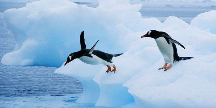 Penguenlerin varlığı 14 bin yıl önceye dayanıyor