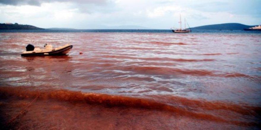 Bodrum'da mavi deniz kahverengi oldu